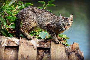 gato mirandote