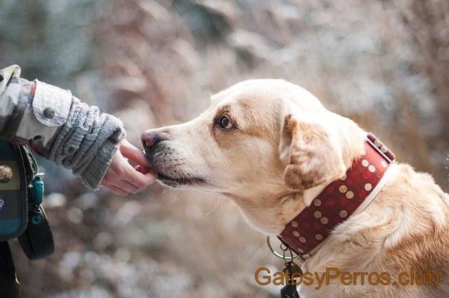 perro amistoso
