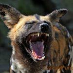 perro riendo
