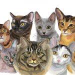 Mejores Razas de Gatos para un Piso