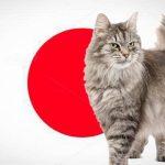 Nombres japoneses para gatos