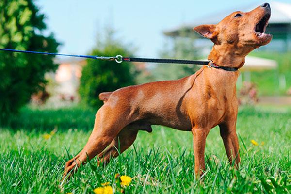el ladrido de un perro